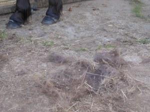 I am thinking of making a horse hair cushion!